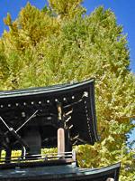 4-kokubunji.jpg